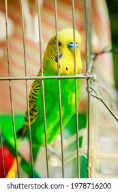 Happy parrot in a cage in nature in the park