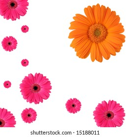 Happy pattern of blooming Daisy petals.