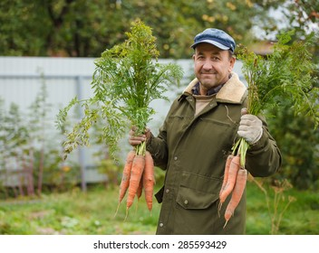 Happy Peasant with good harvest of carrots on his garden