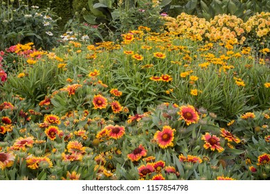 A happy perennial flower garden in a backyard.