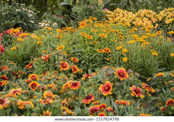 Happy Perennial Flower Garden Backyard Stock Photo Edit Now 1157854798