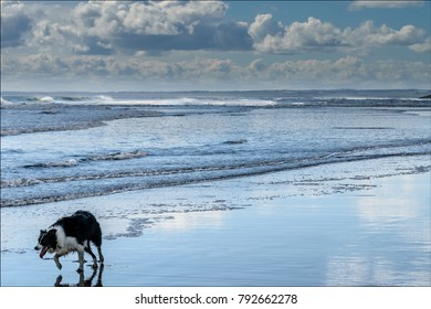 Happy Pooch on the Beach