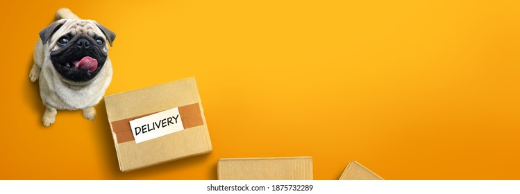 Happy pug dog with delivery boxes. Delivery service advertising concept with copy space.