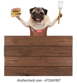 happy pug dog wearing leather barbecue apron, holding hamburger and spatula, with wooden board sign, isolated on white background