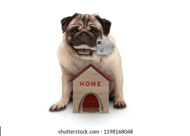 happy pug puppy dog with house key sitting down with miniature house, isolated on white background