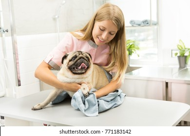 Happy pug sitting on examination table being dried by a professional vet using towel. Cheerful young female vet drying a pug after washing profession occupation job positivity animals pet care