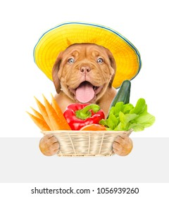 Happy puppy farmer with vegetables above white banner. isolated on white background.