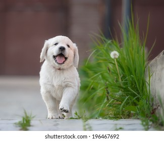 Image result for images of happy puppies