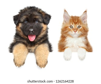 Happy puppy and kitten above banner, isolated on white background