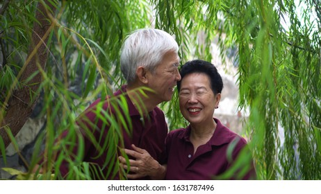 Happy retired Asian elder couple laughing under green willow tree background
