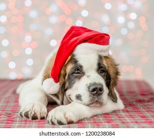 happy Saint Bernard puppy in a Christmas hat