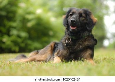 Happy scruffy mix breed dog, at grass, green backround