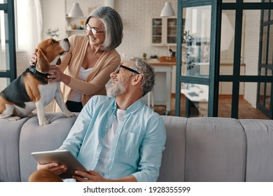 Happy senior couple in casual clothing smiling and taking care of their dog while bonding together at home