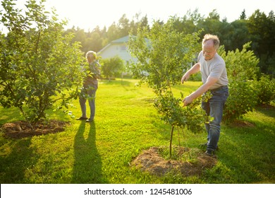 Happy senior couple gardening in apple tree orchard. Mature people working in their garden.