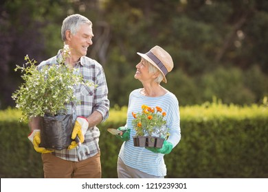 Happy senior couple gardening together in backyard