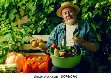 Happy senior man with great harvest in the garden. Gardening and vegetable farming. Happy retirement.