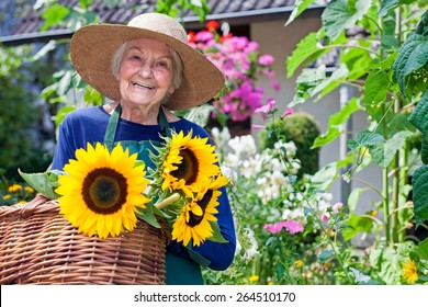 Happy Senior Woman with Brown Hat Carrying Baskets of Fresh Sunflowers at the Garden. Smiling at the Camera.