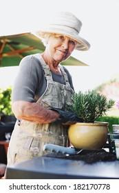 Happy senior woman planting new plant in terracotta pot on a counter in backyard. Senior female gardener working in backyard