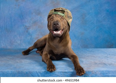 Happy Sharpei with camouflage cap hat on blue mottled background