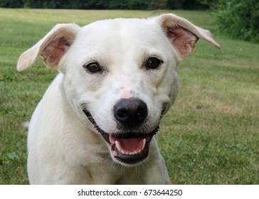 Happy shelter dog