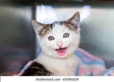 Happy Shelter Kitten