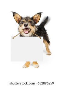Happy small breed dog carrying blank white sign in mouth. Motion blur showing wagging tail.