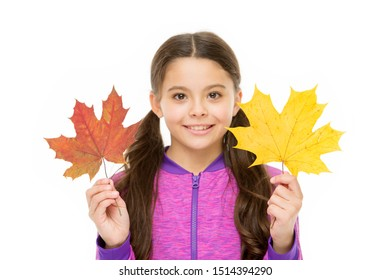 Happy small child play with autumn leaves. Kid isolated on white show leaves. Feelings of comfort and nostalgia we experience in autumn are hard to express. Kid girl hold fallen maple leaves.