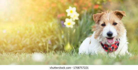 Happy small cute dog puppy smiling in the grass with flowers. Pet holiday, greeting card, summer, spring  concept, banner.
