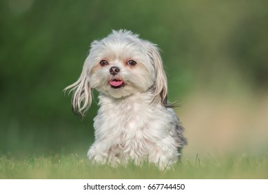 Happy Small Dog Portrait