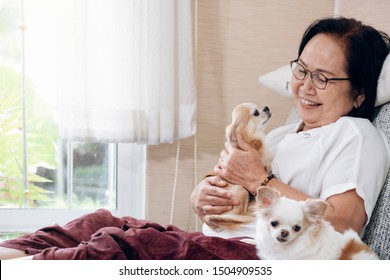 Happy smile asian senior woman with her dogs on couch inside of her house.