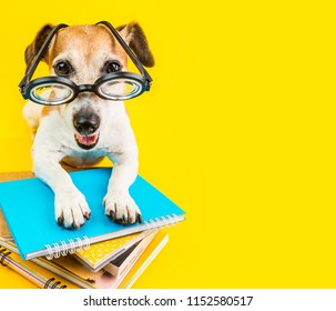 happy smiling back to school dog on yellow background