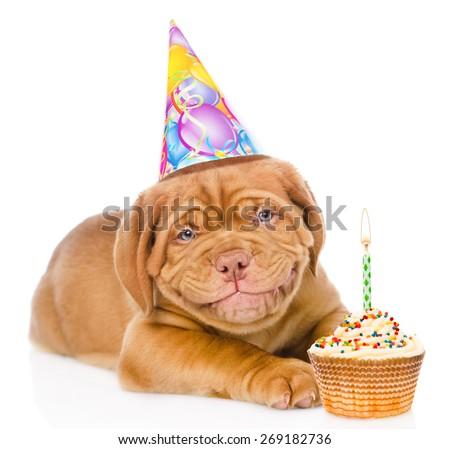 Happy Smiling Bordeaux Puppy Dog Birthday Stockfoto Jetzt