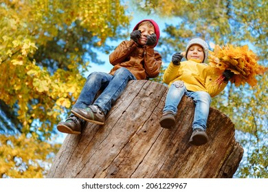 happy smiling boys sitting on big stub in autumn park. Yellow folliage and blue sky on background. High quality photo
