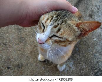 happy smiling cat in my hand