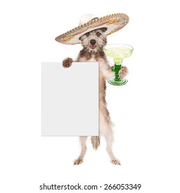 Happy and smiling dog celebrating Cinco De Mayo wearing a big Mexican sombrero and holding a margarita and blank white sign