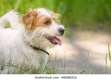 Happy smiling dog on a summer meadow. Pets outdoors. Puppy in a park or in nature.