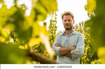 Glücklicher, vierzig Jahre alter, kaukasischer Bauer, der vor einem Weinberg stolz ist. Landwirtschaft oder Gartenbau - Landschaft im Freien, warmes Sonnenuntergang.