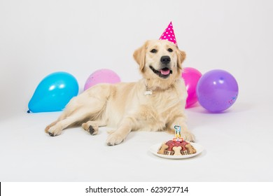 Happy Smiling Golden Retriever Puppy Dog With Birthday Hat And Meat Cake Isolated On White