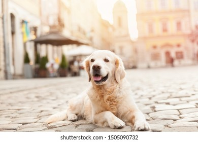 Happy smiling golden retriever young dog on pavement in old european city downtown. Summer morning solar bright effect. Pets friendly vacations travel concept. Dog on the background of architecture.