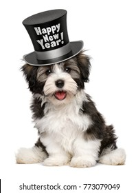 Happy smiling havanese puppy dog is wearing a black Happy New Year top hat, isolated on white background