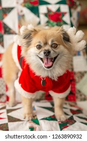 Happy smiling little dog in a santa suit