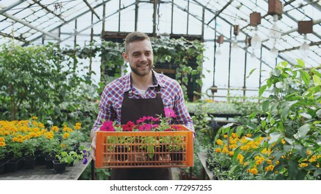 happy smiling man in apron holding box with flowers walking in his greenhouse