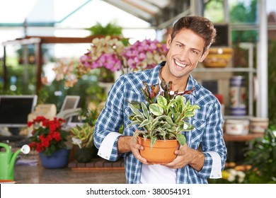 Happy smiling man as gardener in a nursery shop with peperomia magnofolia plant