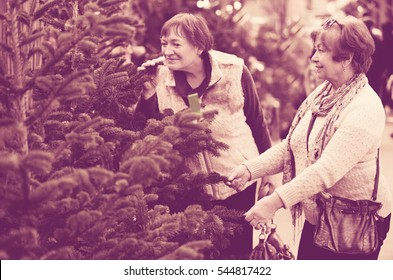 Happy smiling mature women selecting spruce at Christmas market
