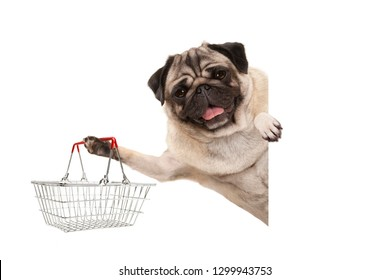 happy smiling pug puppy dog, holding up wire metal shopping basket,behind white banner, isolated