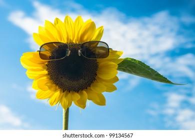 Happy smiling sunflower against blue sky