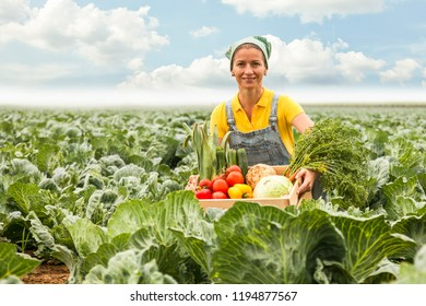 happy smiling ukrainian harvest helper working in a cabbage field with a variation of vegetables in a wooden box.