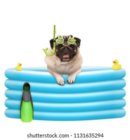 happy summer pug dog with goggles and snorkel, on vacation, in inflatable pool, isolated on white background