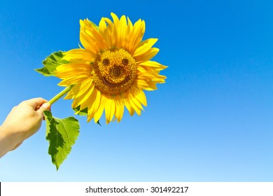Happy sunflower in the hand with funny face