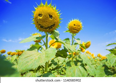 happy sunflower on field with sunflowers, yellow face.